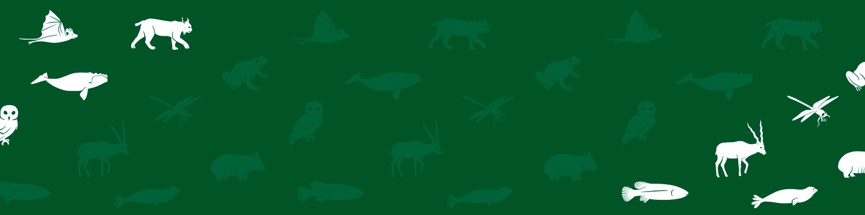 Lacoste x Save Our Species <br>3520 polos, sold out !</br>